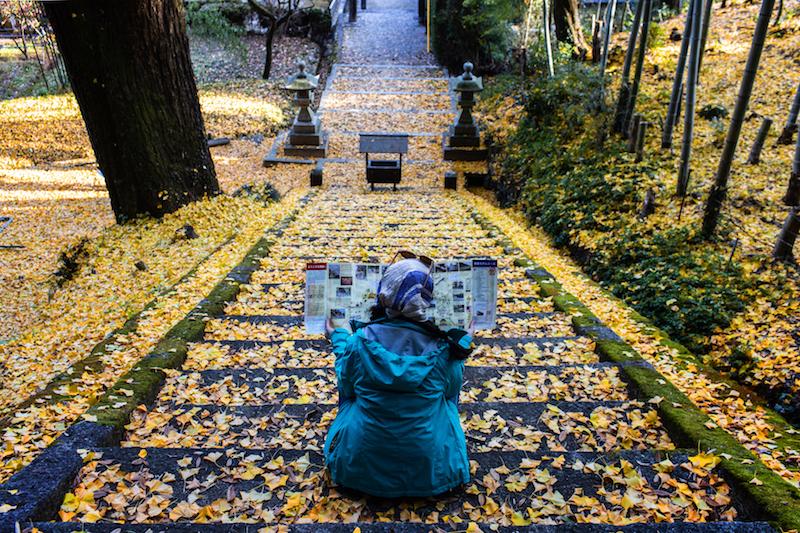 鋪上銀杏地毯的步道