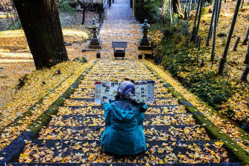 Un chemin bordé de feuilles jaunes de gingko
