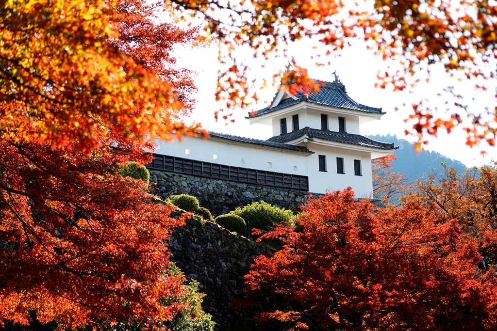 Gujo Hachiman Castle-Autumn