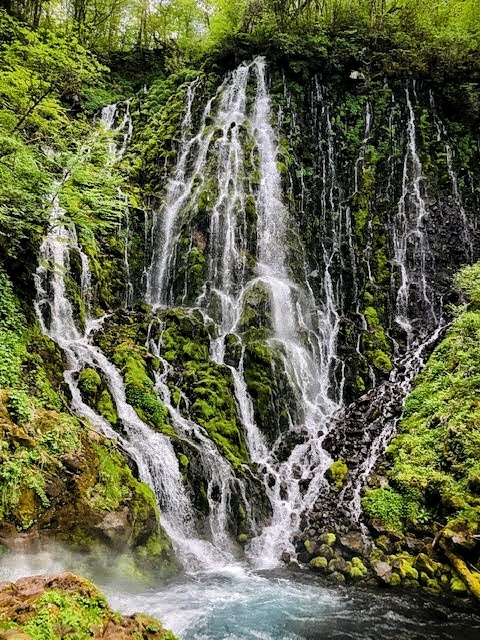 Goshikigara Forest