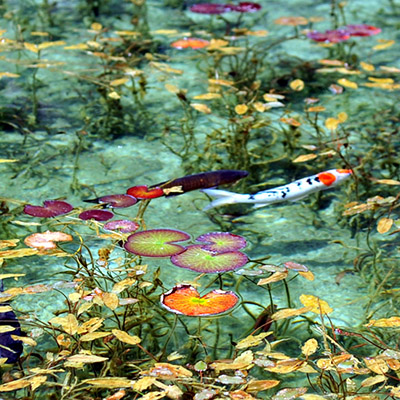 Estanque de Monet