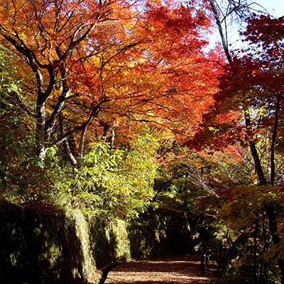 Parco di Shiroyama