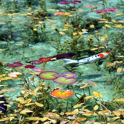 Lo stagno di Monet