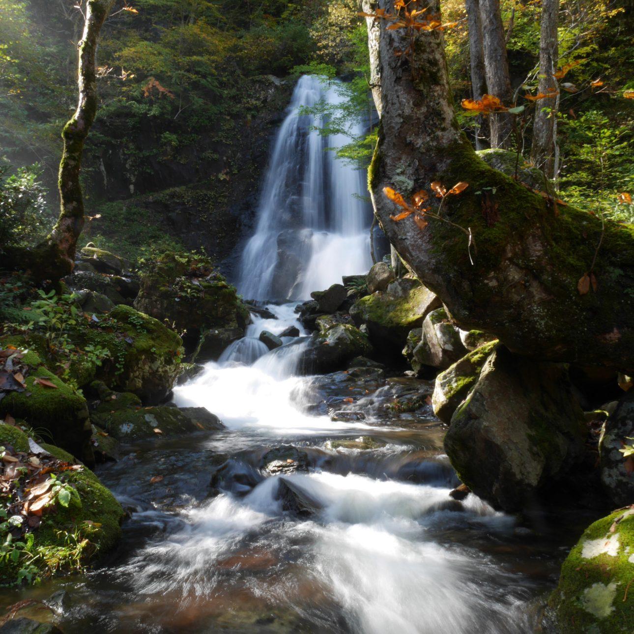 Parque de las 48 cascadas de Utsue
