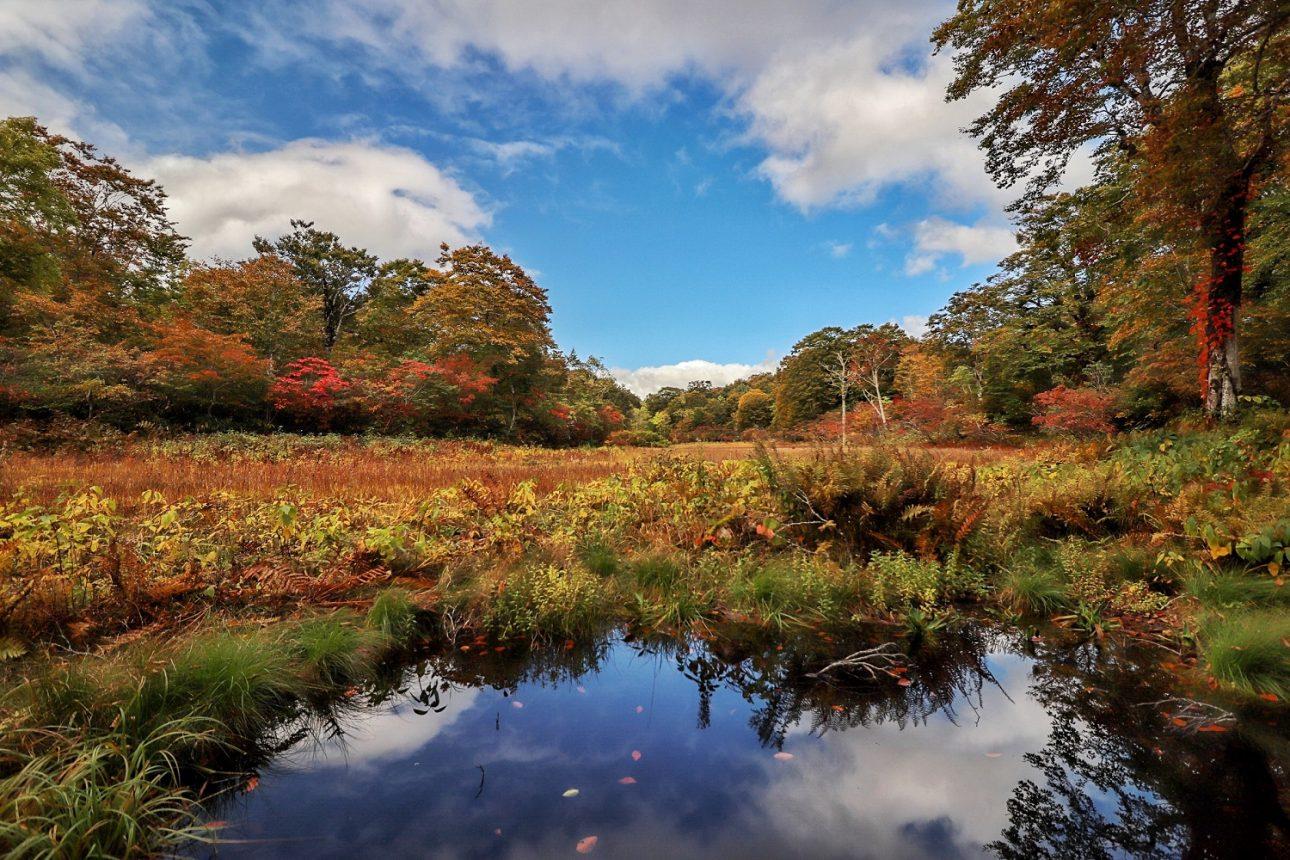 Amou Pref Nature Park_Amou Wetlands